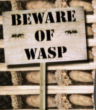 bone_wasp_CTV_2015