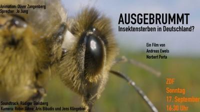 Insektensterben.jpg