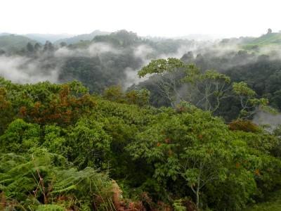 Regenwald_Colombia