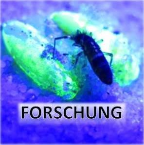 Front_Forsch_16